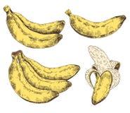 Abstraktes Muster, Tapete, Hintergrund, Hintergrund Gelb mit weiße Hand gezeichneter Banane Vektorskizze, tropisches exotisches Lizenzfreie Stockfotos