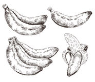 Abstraktes Muster, Tapete, Hintergrund, Hintergrund Weiß mit schwarze Handgezeichneter Banane Vektorskizze, tropisches exotisches Lizenzfreie Stockbilder