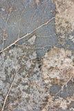 Abstraktes Muster von Blätter adert Makroansicht Stockfotos
