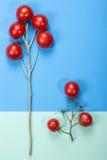 Abstraktes Stillleben mit Tomaten und Niederlassungen stockfotografie