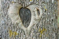 Abstraktes Symbol der Liebe und der Treue auf einem Baum Lizenzfreies Stockfoto