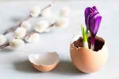 Abstraktes Symbol Ostern des defekten Eies und des violetten Krokusses des neuen Lebens Stockbild