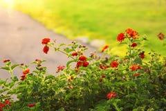 Abstraktes träumerisches Foto der Frühlingswiese mit Wildflowers Lizenzfreie Stockfotos