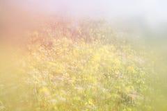 Abstraktes träumerisches Foto der Frühlingswiese mit Wildflowers Weinlese gefiltertes Bild Selektiver Fokus Stockbild
