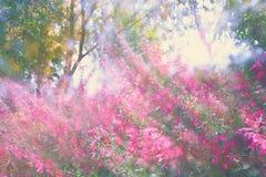 abstraktes träumerisches Foto von Frühling Wildflowers Lizenzfreies Stockfoto