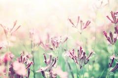 abstraktes träumerisches Foto von Frühling Wildflowers Stockbilder