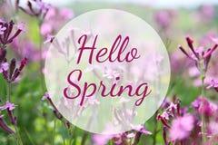 abstraktes träumerisches Foto von Frühling Wildflowers Lizenzfreie Stockbilder