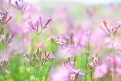 abstraktes träumerisches Foto von Frühling Wildflowers Lizenzfreie Stockfotos