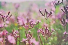 abstraktes träumerisches Foto von Frühling Wildflowers Stockfoto