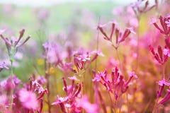 abstraktes träumerisches Foto von Frühling Wildflowers Stockfotos