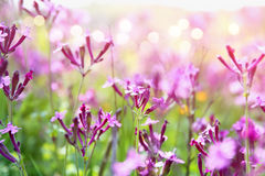 abstraktes träumerisches Foto von Frühling Wildflowers Lizenzfreie Stockfotografie