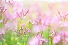 abstraktes träumerisches Foto von Frühling Wildflowers Stockfotografie