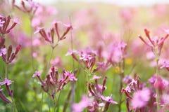 abstraktes träumerisches Foto von Frühling Wildflowers Stockbild