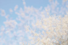 Abstraktes träumerisches und unscharfes Bild Blütenbaums des Frühlinges des weißen Kirsch Selektiver Fokus Stockbilder