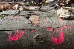 Abstraktes treetrunk im Holz Stockbild