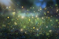 Abstraktes und magisches Bild des Leuchtkäferfliegens im Nachtwaldmärchenkonzept Stockbilder