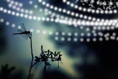 Abstraktes und magisches Bild des Libellenschattenbildes und des Leuchtkäferfliegens im Nachtwaldmärchenkonzept Lizenzfreie Stockfotos