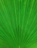 Abstraktes vertikales Palmblattmuster, Hintergrund Lizenzfreies Stockfoto