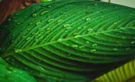Abstraktes Wasser der Kunst lässt Hintergrund auf grünem Blatt fallen Lizenzfreie Stockfotos
