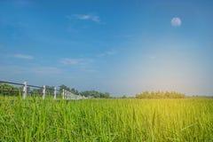 Abstraktes Weiche verwischt und grünes Feld des ungeschälten Reises der Weichzeichnung mit der Bürgersteigsbrücke und schöne der  Stockfotos
