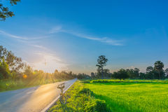 Abstraktes Weiche verwischt und Weichzeichnung das Schattenbild der Sonnenaufgang mit der Straße, dem Fahrrad, Feld des ungeschäl Lizenzfreies Stockfoto