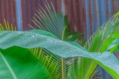 Abstraktes Weiche verwischt und Weichzeichnungsbananenblatt, Kokosnussblätter, nach dem Regen Lizenzfreies Stockbild