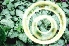 Abstraktion av mintkaramellsidor och viktig arkivfoto