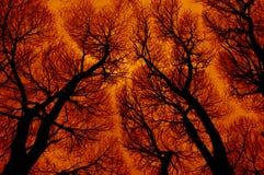 Abstraktion in den brennenden Farben Stockbild