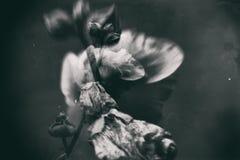 Abstraktion der Malve in einer Doppelbelichtung Schwarzweiss Stockfotografie