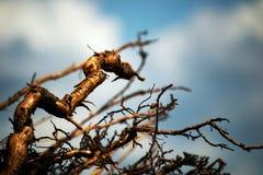 Abstraktion der Wurzeln und des Himmels Stockfoto