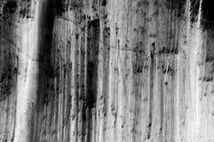 Abstraktion des Waldes in Schwarzweiss Lizenzfreie Stockbilder
