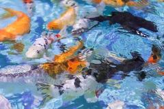Abstraktion eines schönen Fischhintergrundes im klaren Wasser Stockfoto