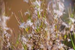 Abstraktion höstgräs Arkivfoto