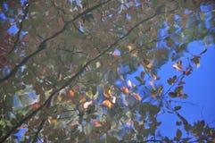 Abstraktion: Herbstlaub färbt Reflexion im Wasser Stockbild