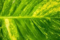 Abstraktion Hintergrundunschärfe-Grünhintergrund Stockfoto