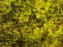 Abstraktion, Meerespflanze Laminaria Lizenzfreies Stockbild