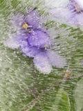 Abstraktion mit den lila Blumen zerbrechlich Stockfotos