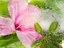 Abstraktion mit einer Blume und Blättern Lizenzfreie Stockfotos