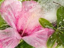 Abstraktion mit einer Hibiscusblume Stockbilder