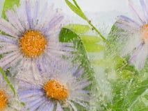 Abstraktion mit empfindlichen Blumen Stockbild