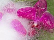Abstraktion mit empfindlichen Orchideen Lizenzfreie Stockfotografie
