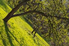Abstraktion mit grünem Gras Lizenzfreie Stockbilder
