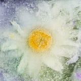 Abstraktion mit Kamillenblume Lizenzfreie Stockbilder