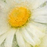 Abstraktion mit netter Gänseblümchenblume Stockbilder