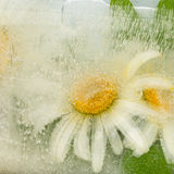 Abstraktion mit organischen Kamillenblumen Stockfotografie