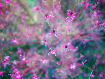 Abstraktion mit rosa Blumen Stockfotografie