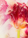 Abstraktion mit roten Tulpen Lizenzfreie Stockfotos