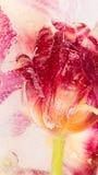 Abstraktion mit roter Blumentulpe Lizenzfreie Stockbilder