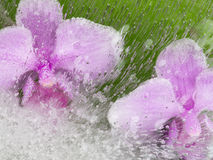 Abstraktion mit zwei rosa Orchideen Stockfotos