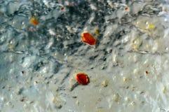 Abstraktion Orange Beeren Warm und Kälte Lizenzfreies Stockbild